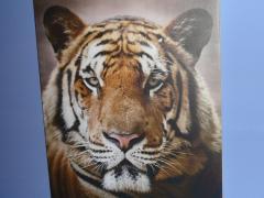 Művészi festővászon - canvas, kanavász, vászon #7